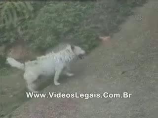 смешное видео с животными